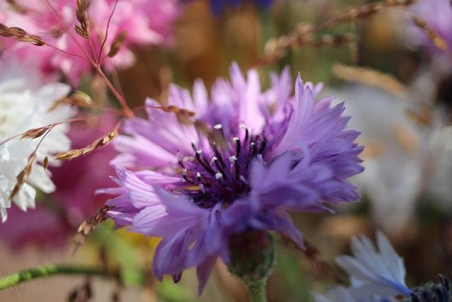 mooiste bloemen voor thuis